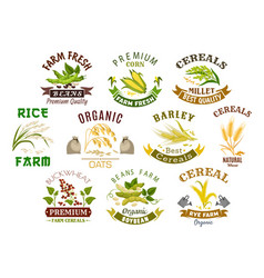 Grain and cereal product isolated icons vector