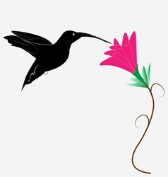 Humming Bird and The Flower vector