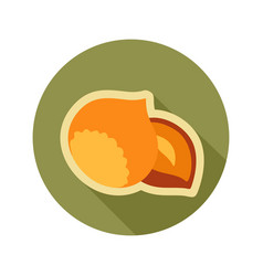 Nut flat icon fruit vector