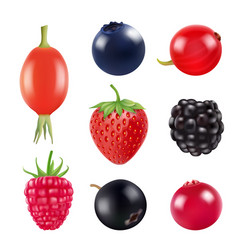 Set berries realistic pictures fresh fruits vector