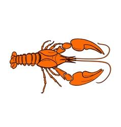 Color crawfish vector