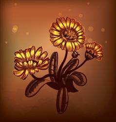 Marigold vector image