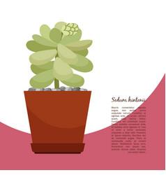 sedum hintonii plant in pot banner vector image