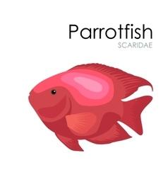 Aquarium fish Parrotfish vector image