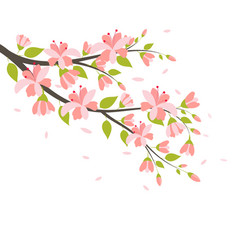 Beautiful cherry blossom branches vector