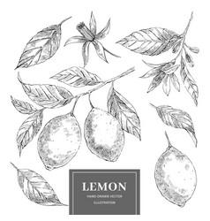 lemon hand drawn set vector image