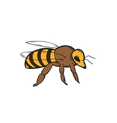 One bee vector