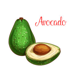 avocado tropical fruit sketch icon vector image vector image