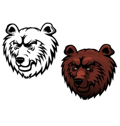 wild kodiak bear vector image vector image