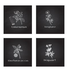 Handdrawn medicinal herbs - health and nature set vector