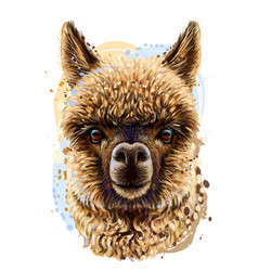 alpaca llama realistic portrait vector image