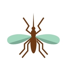 Anopheles mosquito vector