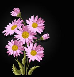 beautiful pink daisies vector image
