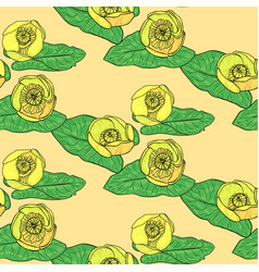 nuphar lutea pattern vector image vector image