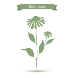 Echinacea plant with flowers silhouette vector image