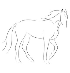 black line horse on white background icon vector image
