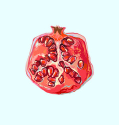 half pomegranate with seeds hand drawn fruit vector image