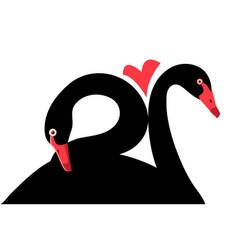 portraits black swans in love vector image