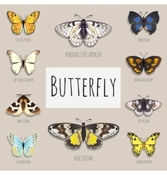 Set of butterflies with space for text vector image