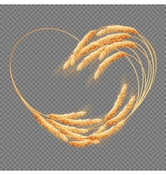 Wheat ears Heart isolated EPS 10 vector