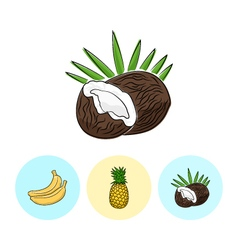 Fruit Icons Coconut Pineapple Banana vector image