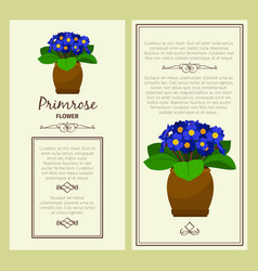 Greeting card with primrose plant vector