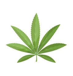 green leaf of hemphippy single icon in cartoon vector image