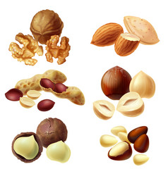 3d realistic set of various nuts vector