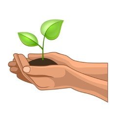 Hands and Plant on White Background vector