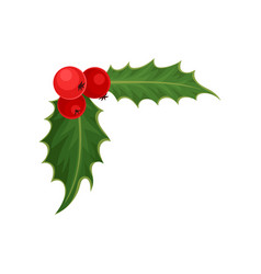holly with red berries and green leaves vector image