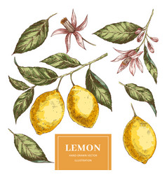 lemons hand drawn pack vector image