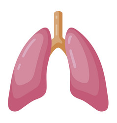 lungs large organ in a human body vector image