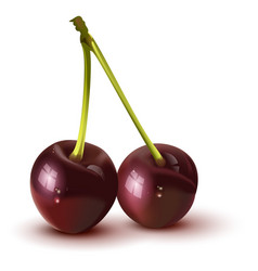 Red sweet ripe two cherry berry vector