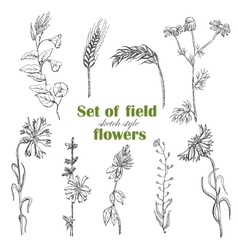 Set of isolated field plants in sketch style vector