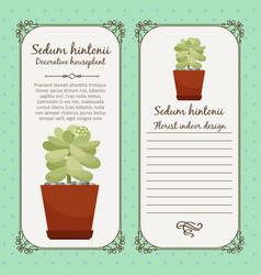 Vintage label with sedum hintonii plant vector