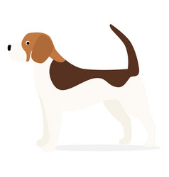 beagle small dog vector image