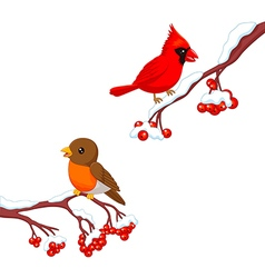 Cute cartoon robin bird and cardinal bird vector image
