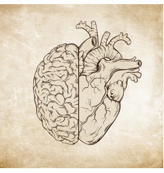Human brain and heart halfs over grunge aged paper vector