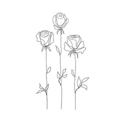 rose flower set continuous drawing vector image
