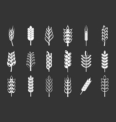 wheat icon set grey vector image