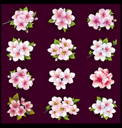 set of cherry and apple blossom vector image