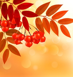 Autumn background with colorful leaves and rowan vector