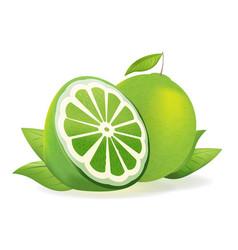 green lemon fresh isolate fruit vector image