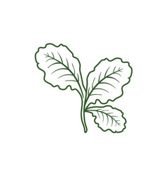 leaf lettuce icon vector image