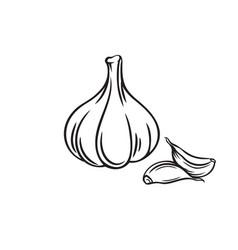 Outline bunch garlic vector