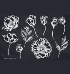 set hand drawn chalk poppy flower vector image