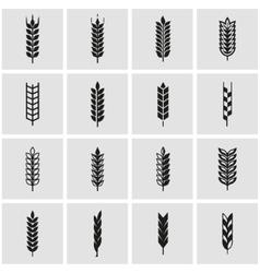 black wheat ear icon set vector image vector image
