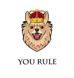 chihuahua dog wearing crown dog king vector image vector image