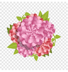 camellia fresh flower concept background cartoon vector image