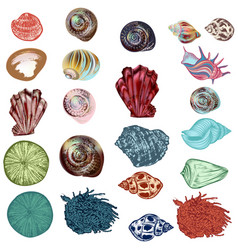 collection sea shells for design hand drawn style vector image